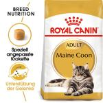 Royal Canin Maine Coon 31 | 10kg