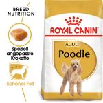 Royal Canin Breed Pudel 30 | Adult 1,5kg